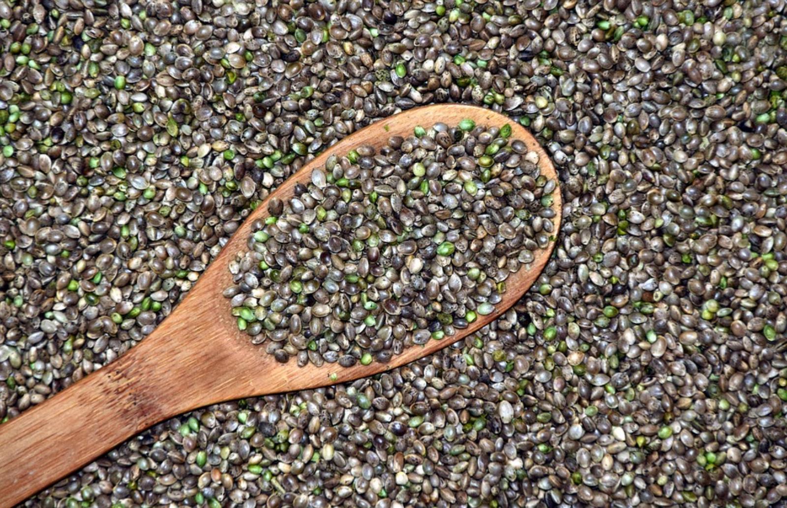 semillas-cañamo